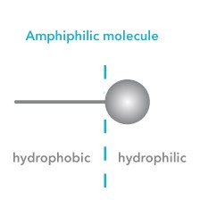 Amphiphilicmolecule
