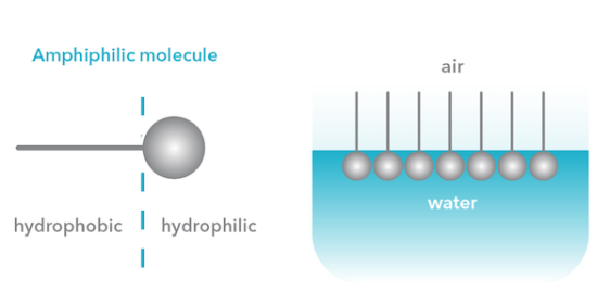 hydrophobic-hydrophilic.png