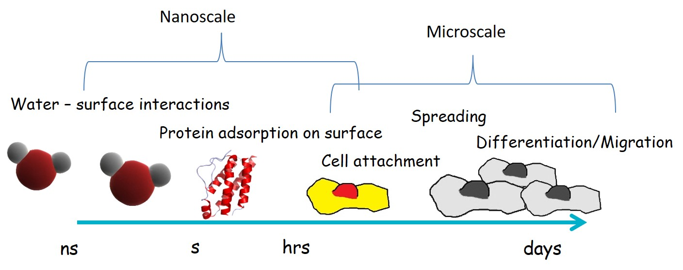 biomaterial interactions